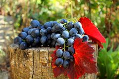 Bunch of grapes with leaves Royalty Free Stock Photo