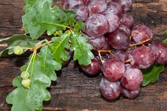 Bunch of grapes and oak leaf Stock Image