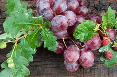 Bunch of grapes and oak leaf Stock Photos