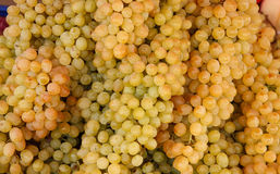 Bunch grapes Royalty Free Stock Photo