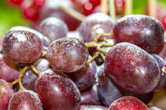 A bunch of grapes Stock Image