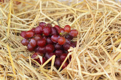 Bunch of grapes on straw Stock Photography