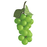 Bunch of grapes. Vector illustration. Stock Images