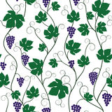 Bunch of grapes and vine Stock Images