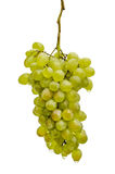 Bunch of grapes. Wet bunch of fresh grapes closeup isolated on white background Stock Photos