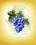 Bunch of grapes on a yellow background. Bunch of dark blue grapes on a yellow background Royalty Free Stock Photos