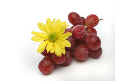 Bunch of grapes with a yellow flower. Cluster of grapes with drops and a yellow flower over a white background. Look at my gallery for more fruits and vegetables royalty free stock image