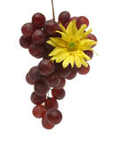 Bunch of grapes with a yellow flower. Pending cluster of grapes with drops and a yellow flower over a white background. Look at my gallery for more fruits and royalty free stock photography