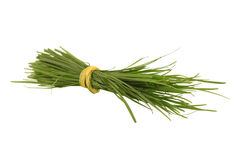 Bunch of a grass Stock Photography