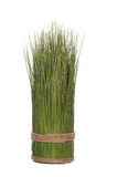 Bunch of grass Royalty Free Stock Image