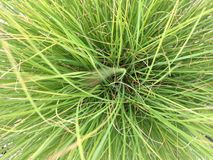 Bunch Grass Stock Photography
