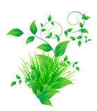 Bunch grass and green leaves Royalty Free Stock Photo