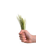 Bunch of grass in hand Stock Photos