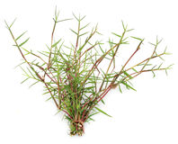 Bunch of Grass Stock Photography
