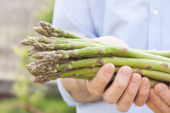 Bunch of green asparagus in gardener's hands close up Stock Images