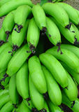 Bunch of green bananas. Recently cut from the tree Royalty Free Stock Photos