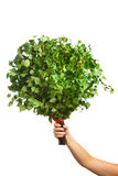 Bunch of green birch twigs in hand Royalty Free Stock Photos