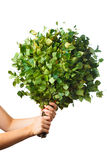 Bunch of green birch twigs in hand Stock Photography