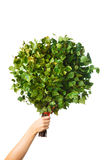 Bunch of green birch twigs in hand Stock Images