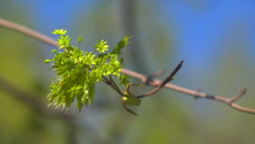 A bunch of green on branch stock footage