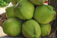 Bunch of green coconuts, Boracay Island, Philippines Stock Image