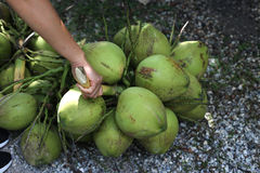 Bunch of  green Coconuts. Royalty Free Stock Photos