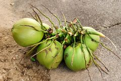 Bunch of green coconuts lying on a street. Big bunch of green coconuts lying on a street Stock Photo
