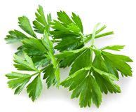 Bunch of green coriander Royalty Free Stock Photos