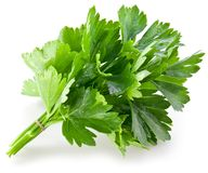 Bunch of green coriander Stock Photos