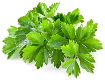 Bunch of green coriander. On a white background Royalty Free Stock Images