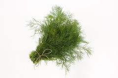 Bunch of green dill Stock Images