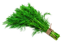 Bunch of green dill Royalty Free Stock Photos