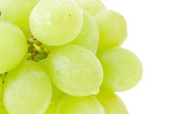 Bunch of green grapes Royalty Free Stock Photo