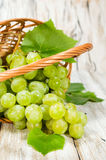 Bunch of green grapes in a basket Stock Images