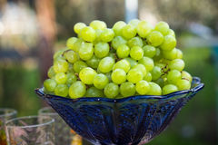 A bunch of green grapes in a blue vase Stock Photography
