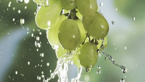 Bunch of green grapes in a spray of water stock video