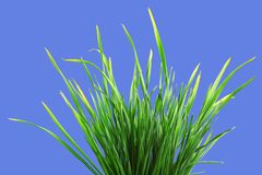 Bunch of green grass Stock Images