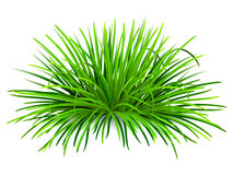 Bunch of green grass. Green grass,  with reflection on white background. Vector Illustration Stock Image