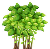 Bunch of green leaves. Illustration Stock Images