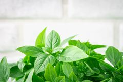 A bunch of green lemon basil on a white concrete table against a brick wall background.  royalty free stock photography