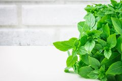 A bunch of green lemon basil on a white concrete table against a brick wall background.  stock photography
