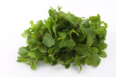 Bunch of Green mint leaves Royalty Free Stock Photography
