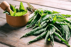 Bunch of green nettle. Green nettle in mortar with pestle on wooden background, medicinal herb royalty free stock photography