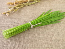 Bunch of green oat grass for smoothie Stock Photo