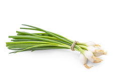 Bunch of green onion on white background Royalty Free Stock Photography
