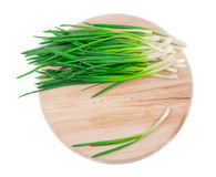 Bunch of green onion Stock Images