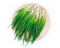 Bunch of green onion Stock Photography