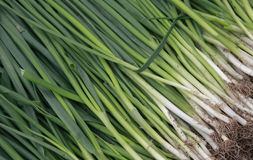 A bunch of green onions Stock Photos