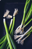 Bunch of green onions Royalty Free Stock Photography