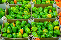Bunch of green paprika in boxes Royalty Free Stock Photo